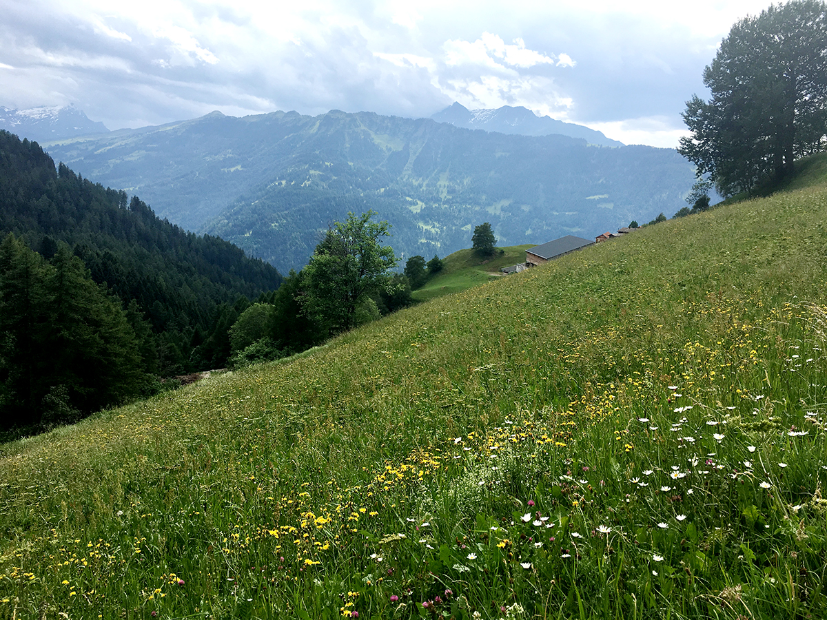 Kräuterwanderung Feldis: Blumenwiese oberhalb des Dorfes