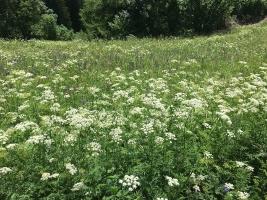 Blumenweg in Feldis