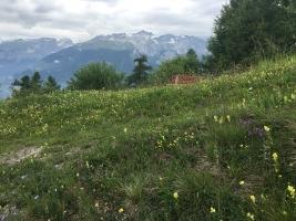 Blumenwiese in Feldis