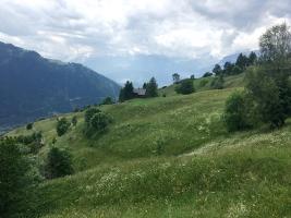 Blumenwiesen Kräuterwanderung Feldis (Graubünden)