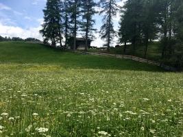 Blumenwiese oberhalb Feldis