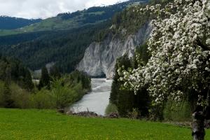 Rheinschlucht-Fruehling (Kräuterwanderung Trin / Flims)