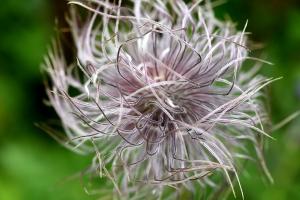 Kräuterwanderungen Melchsee-Frutt (188 Bilder):