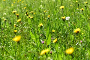 Blumenwiese Kräuterwanderung Sihlsprung