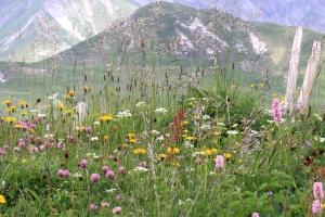Blumenwiese Lenk im Simmental