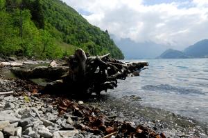 Kräuterwanderungen Quinten am Walensee, Kanton St. Gallen, Ostschweiz (110 Bilder):