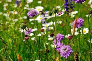 Farbenprächtige Blumenwiese am Walensee