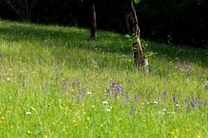 Blumenwiese in Quinten