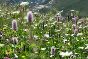 Kräuterwanderungen Vals, Graubünden (95 Bilder):