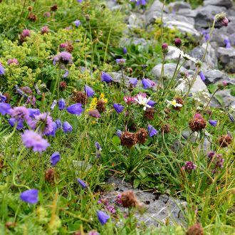 Blumenwiese Kräuterwanderung Melchsee-Frutt